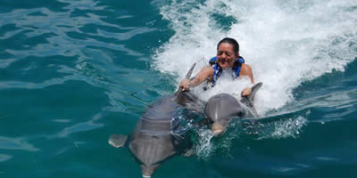 Swim with Dolphin, Activities in Cancun