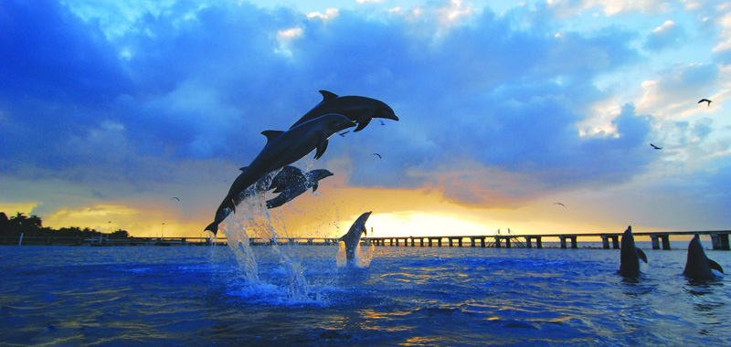 Tour Swin with Dolphins, Buy Tickets to Tulum & Xel Ha, Tours Cancun Riviera Maya
